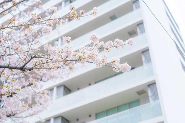 引っ越しシーズンを狙って売却する 桜とマンション外観